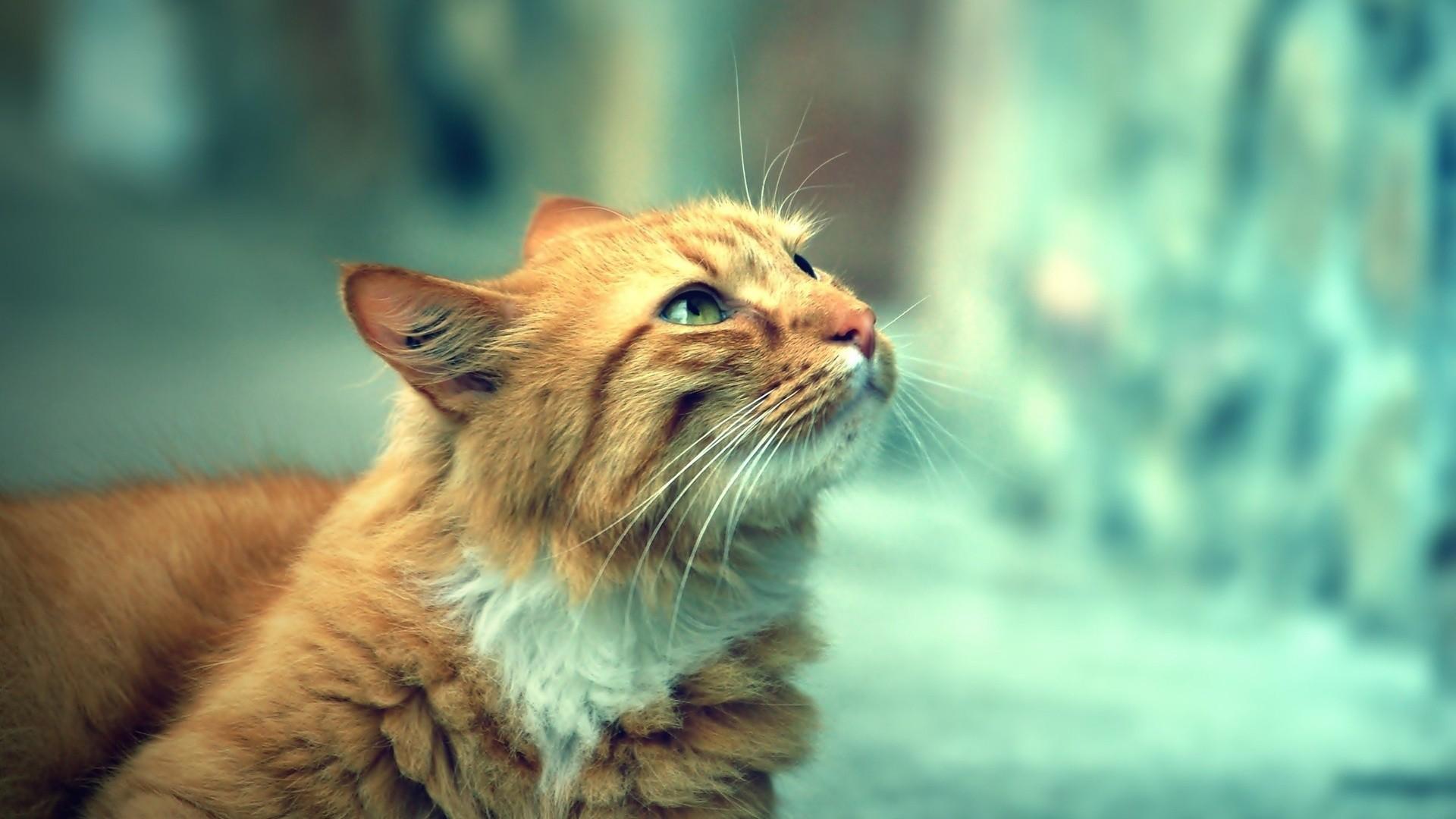 Cats-cats-1920x1080